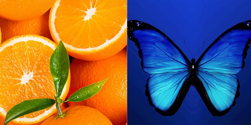 masterclass oranje blauw