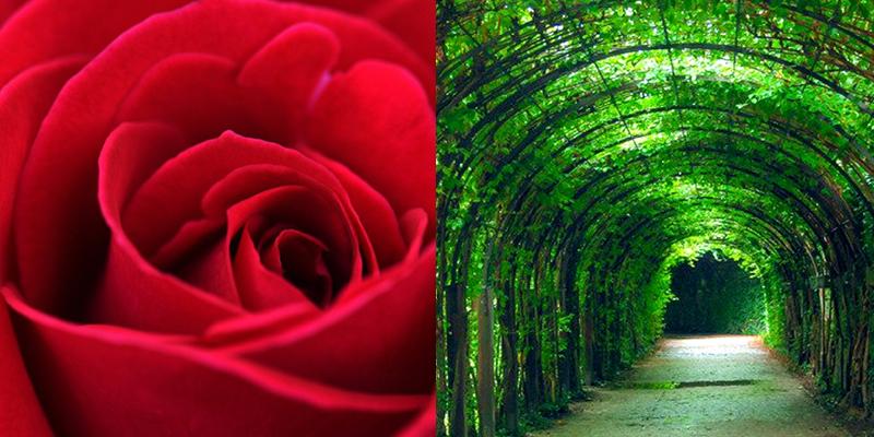 masterclass rood groen