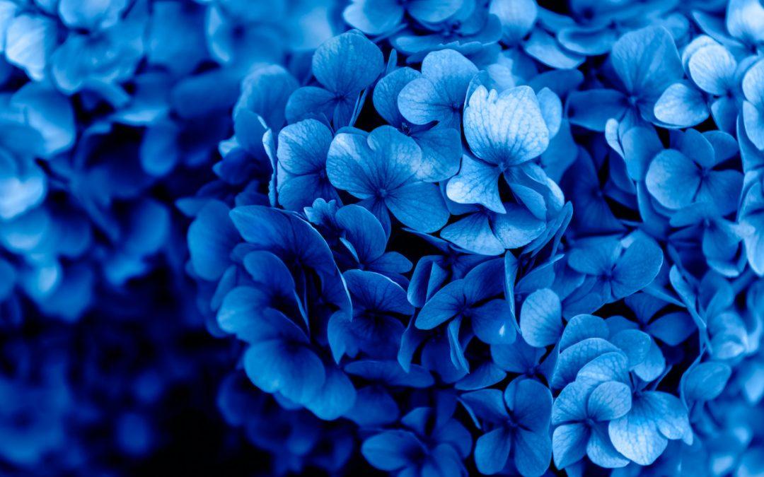 Straalt elke tint van Blauw rust uit?